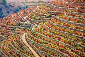 winery, douro, portugal
